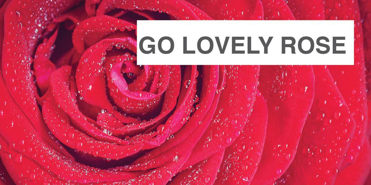 go lovely rose an explication essay After much procrastination and many pointless breaks, i'm done with my essay explication essay how to go lovely rose essay virginia.