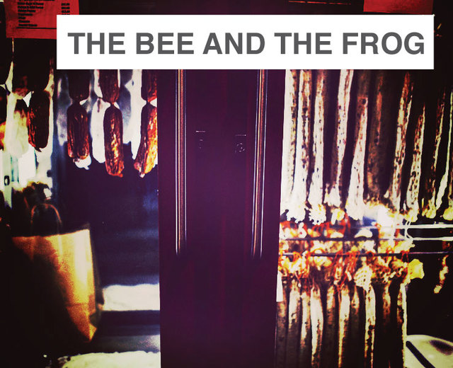 The Bee and the Frog | The Bee and the Frog| MusicSpoke