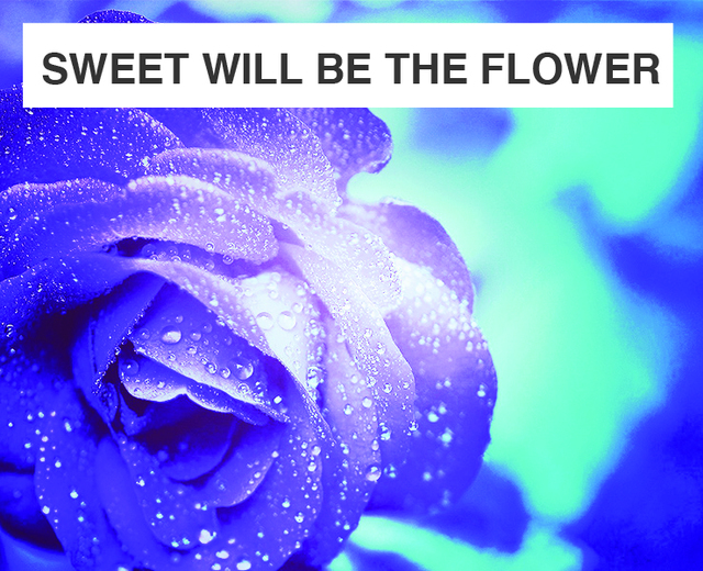 Sweet Will Be the Flower | Sweet Will Be the Flower| MusicSpoke