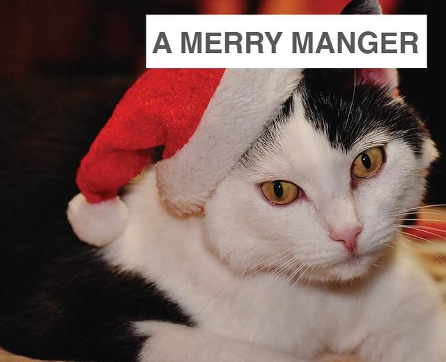 We Deck You A Merry Manger | We Deck You A Merry Manger| MusicSpoke