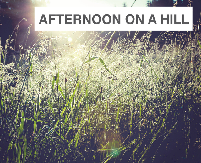 Afternoon on a Hill | Afternoon on a Hill| MusicSpoke