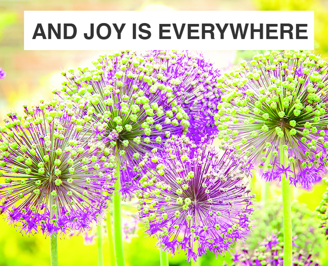 And Joy is Everywhere | And Joy is Everywhere| MusicSpoke