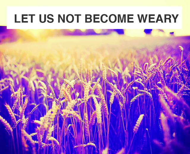 Let Us Not Become Weary | Let Us Not Become Weary| MusicSpoke