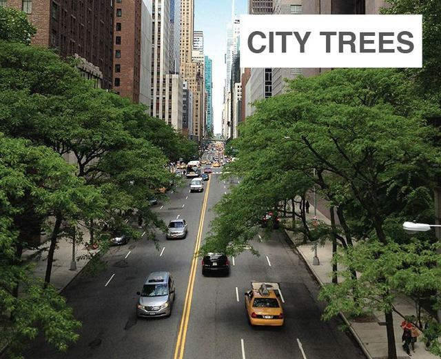 City Trees | City Trees| MusicSpoke