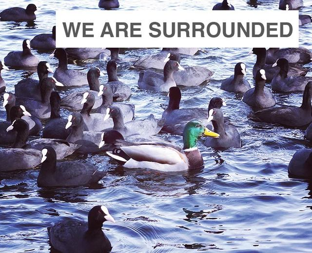 We Are Surrounded | We Are Surrounded| MusicSpoke