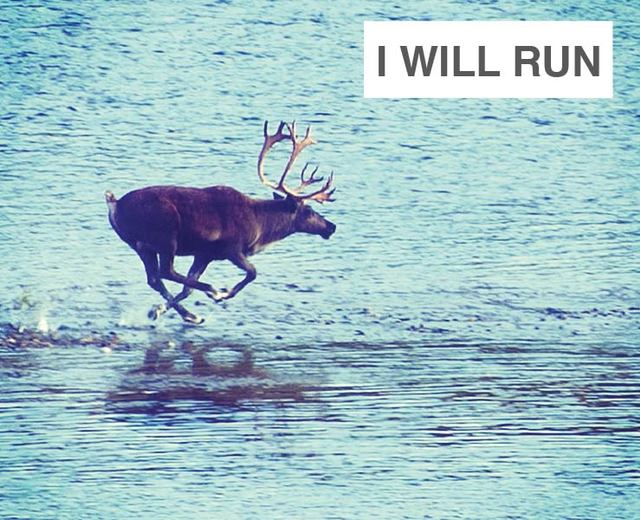 I Will Run | I Will Run| MusicSpoke