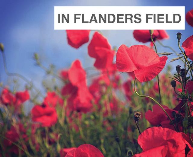 In Flanders Fields | In Flanders Fields| MusicSpoke