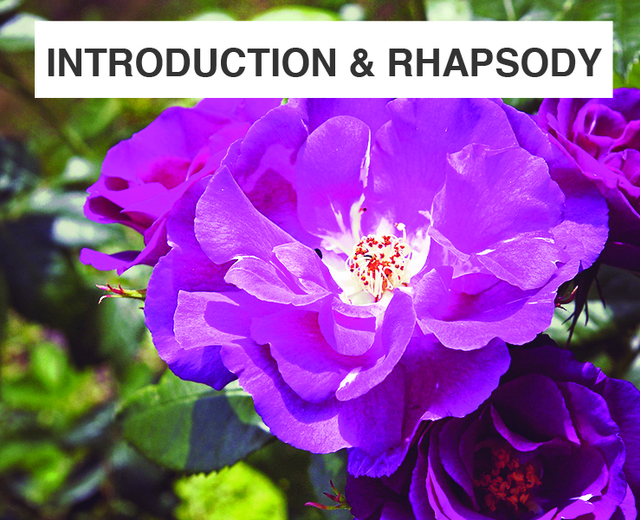 Introduction and Rhapsody | Introduction and Rhapsody| MusicSpoke