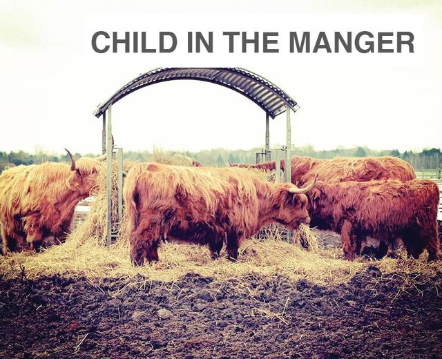 Child in the Manger | Child in the Manger| MusicSpoke