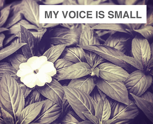 My Voice is Small | My Voice is Small| MusicSpoke