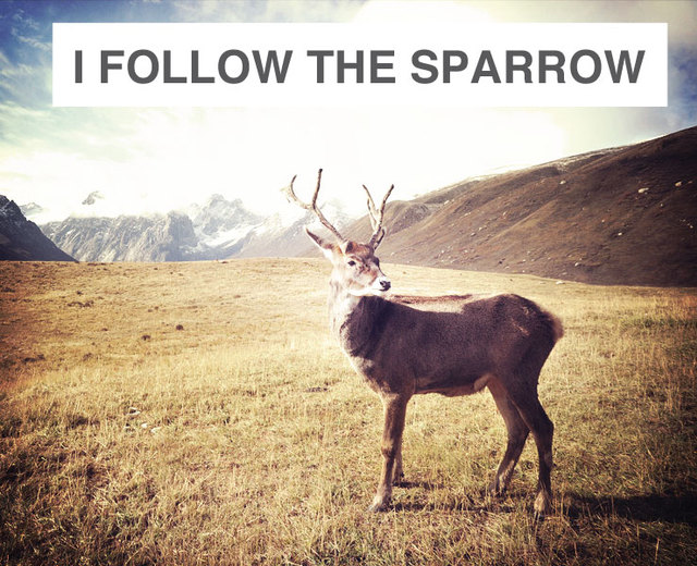 I Follow the Sparrow | I Follow the Sparrow| MusicSpoke
