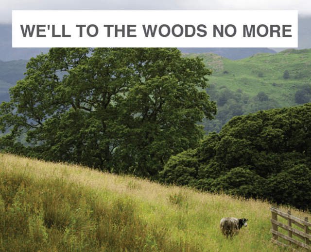 We'll to the Woods No More | We'll to the Woods No More| MusicSpoke