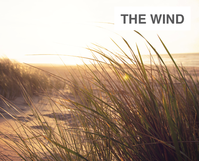 The Wind, One Brilliant Day | The Wind, One Brilliant Day| MusicSpoke