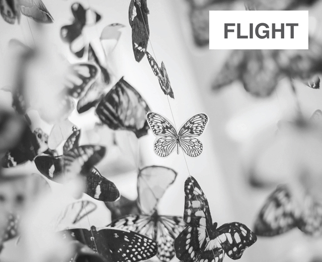 FLIGHT | FLIGHT| MusicSpoke