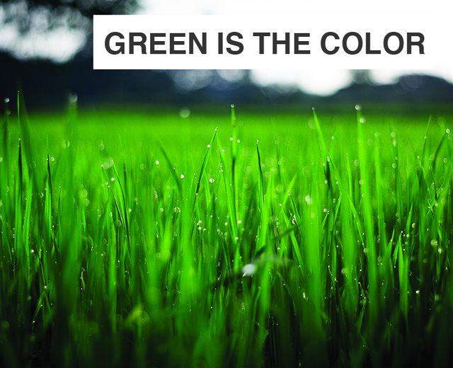 Green Is the Color of Its Flame | Green Is the Color of Its Flame| MusicSpoke