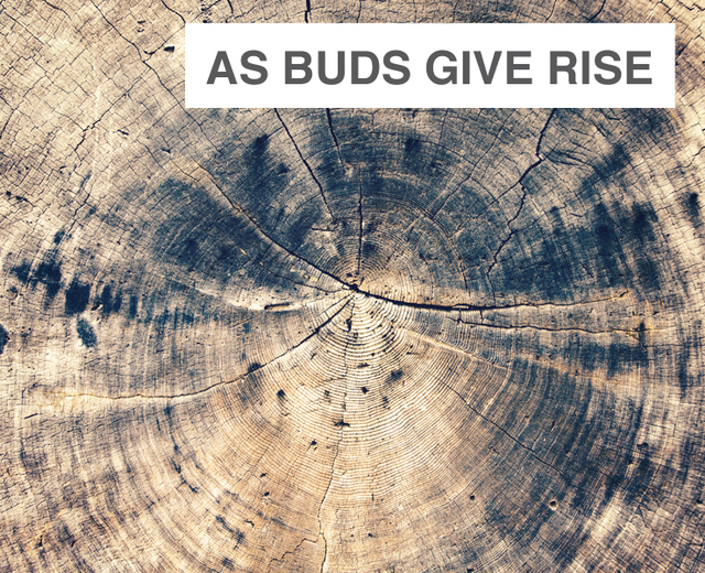 As Buds Give Rise | As Buds Give Rise| MusicSpoke