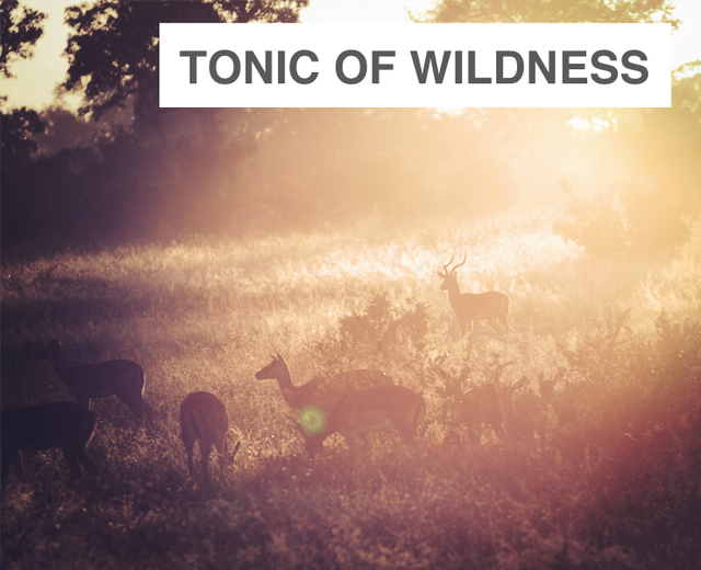 Tonic of Wildness | Tonic of Wildness| MusicSpoke