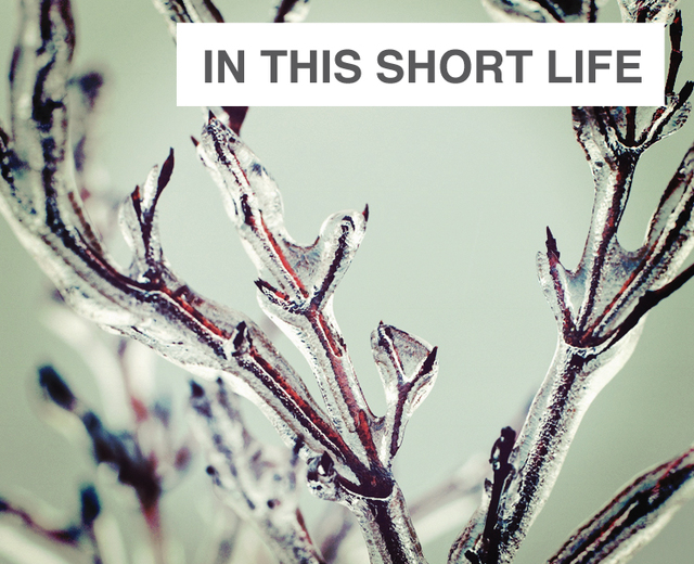 In this short Life | In this short Life| MusicSpoke