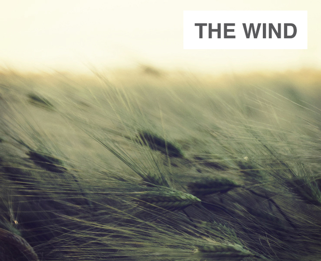 The Wind | The Wind| MusicSpoke