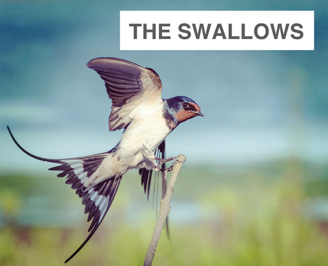The Swallows | David Warin Solomons | MusicSpoke | The Swallows | David Warin Solomons | MusicSpoke| MusicSpoke