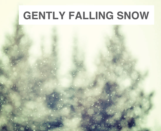 Gently Falling Snow | Gently Falling Snow| MusicSpoke