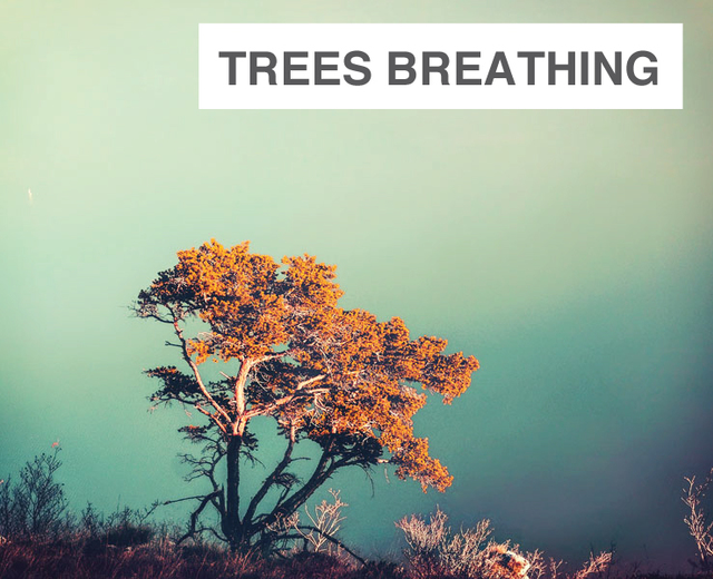 Trees Breathing | Trees Breathing| MusicSpoke