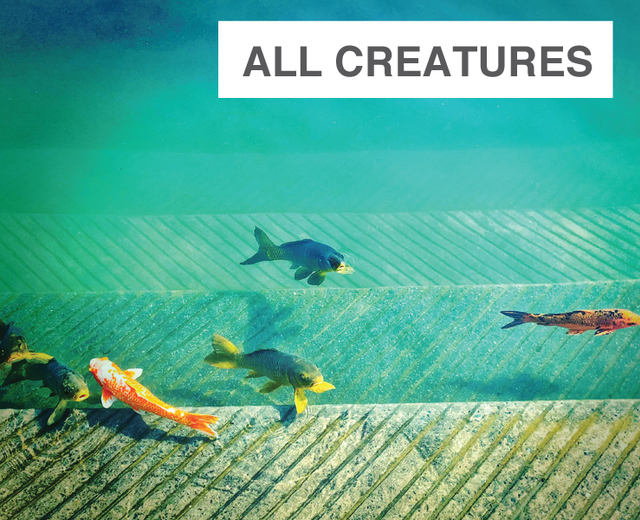 All Creatures That Have Breath and Motion | All Creatures That Have Breath and Motion| MusicSpoke