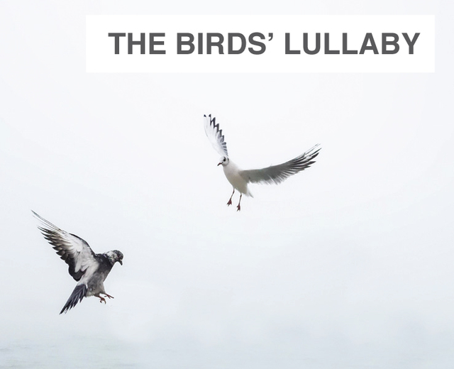 The Birds' Lullaby | The Birds' Lullaby| MusicSpoke