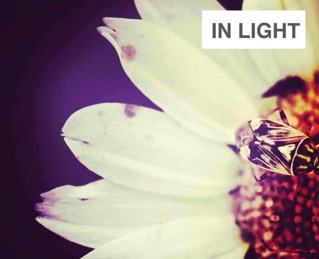 In Light | In Light| MusicSpoke