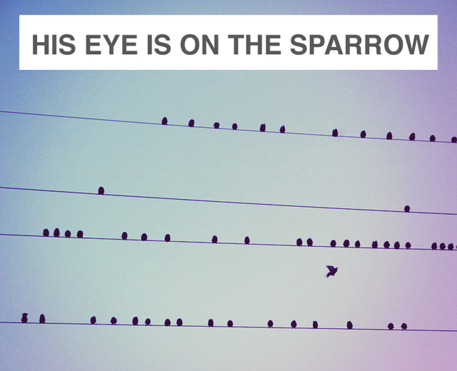 His Eye is on the Sparrow | His Eye is on the Sparrow| MusicSpoke