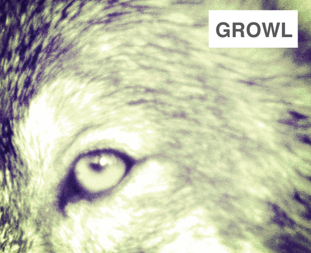 Growl | Growl| MusicSpoke