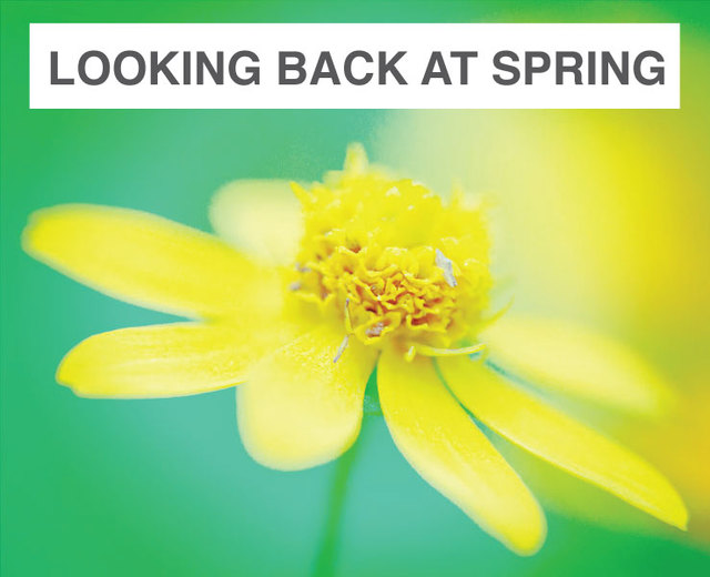 Looking Back at Spring | Looking Back at Spring| MusicSpoke