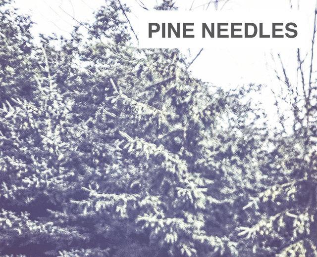 Pine prairie la single gay men