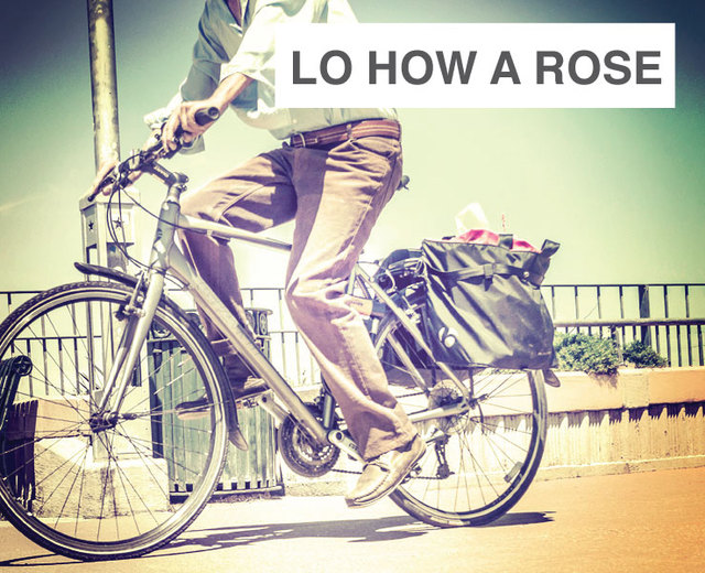 Lo How a Rose | Lo How a Rose| MusicSpoke
