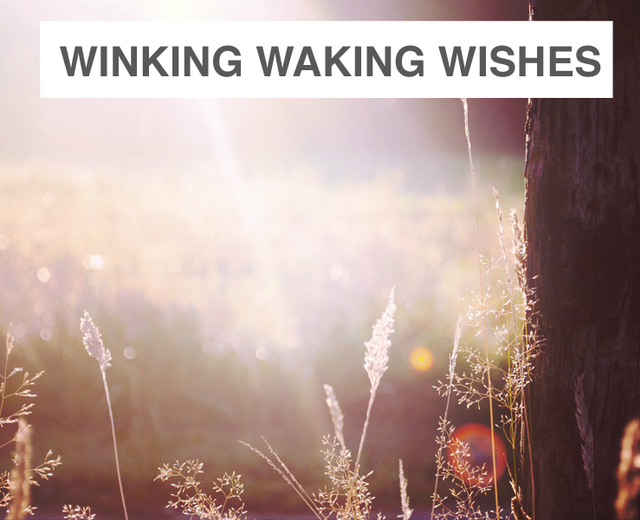 Winking Waking Wishes Wail | Winking Waking Wishes Wail| MusicSpoke