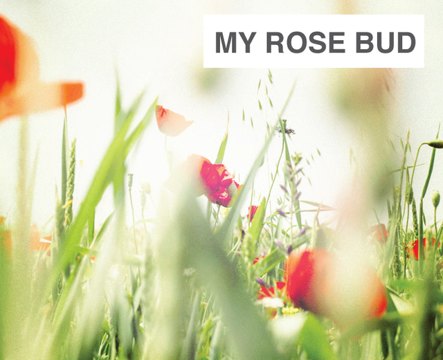 My Rose Bud, My Green Branch | My Rose Bud, My Green Branch| MusicSpoke