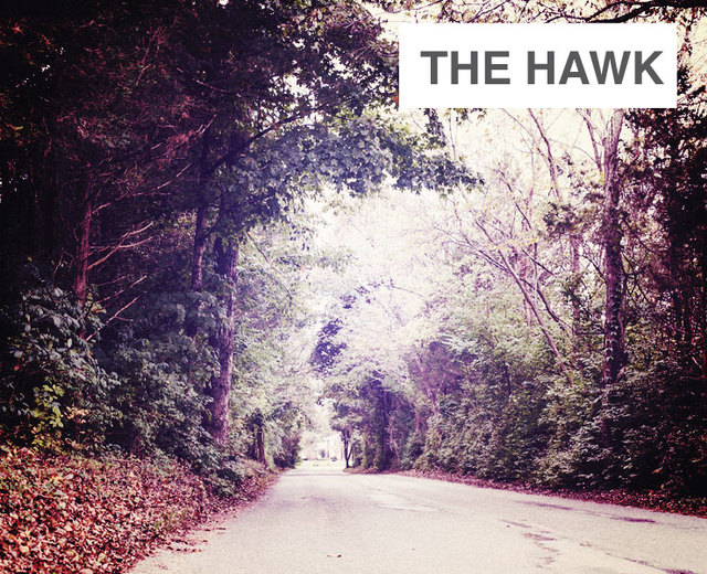 The Hawk | The Hawk| MusicSpoke