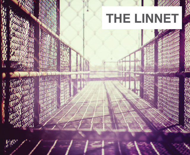 The Linnet | The Linnet| MusicSpoke