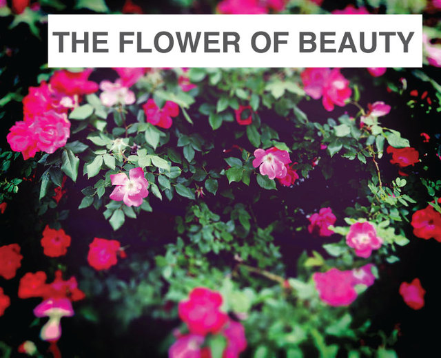 The Flower of Beauty Slumbers | The Flower of Beauty Slumbers| MusicSpoke