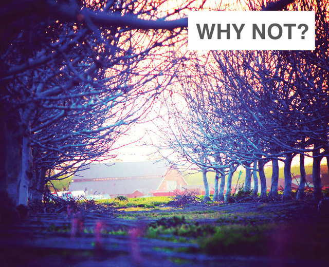 Why Not? | Why Not?| MusicSpoke