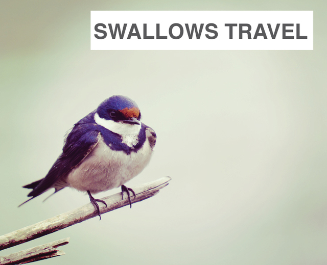 Swallows Travel To and Fro | Swallows Travel To and Fro| MusicSpoke